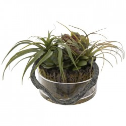 Air Pl ts In Glass Pot