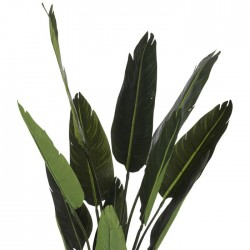 Bird Of  dise Palm Leaves In Black Pot