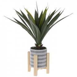 Agave Bush In Pot With St
